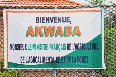 LE MINISTRE FRANÇAIS DE L'AGRICULTURE VISITE UNE PLANTATION DE CACAO A TOMBOKRO PRES DE YAMOUSSOUKRO